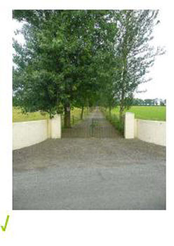 Tree lined drive with discreet entrance driveway